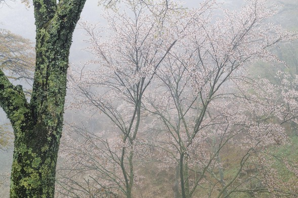 20150411朝の奈良・吉野山SD1-50.jpg