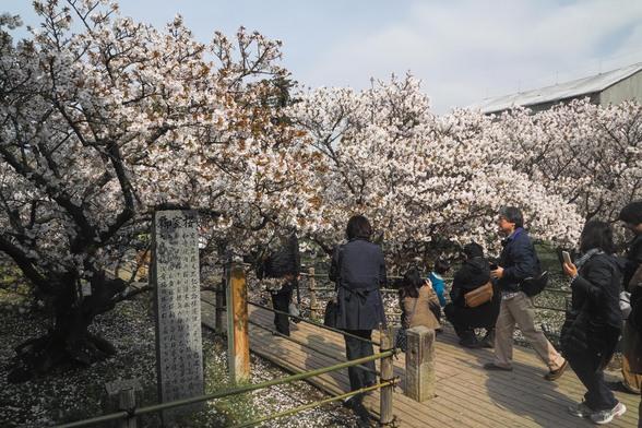 20150412朝の京都・仁和寺SD1-23.jpg