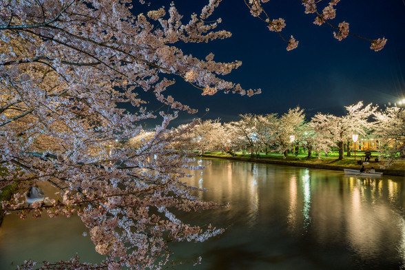 20150422午前の弘前公園A7R-93.jpg