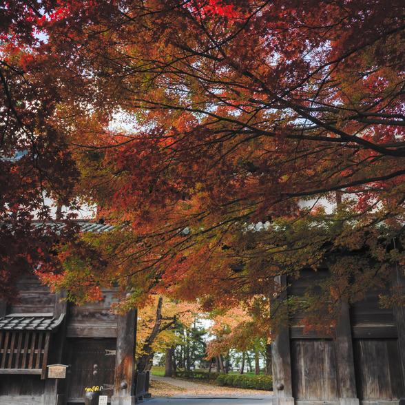 20151101午前の弘前公園CFV50-20.jpg