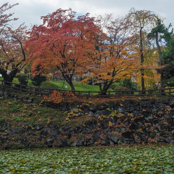 20151101午前の弘前公園CFV50-43.jpg