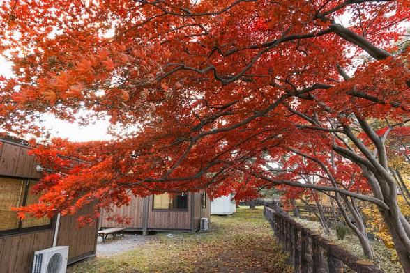 20151101午前の弘前公園dp0-41.jpg