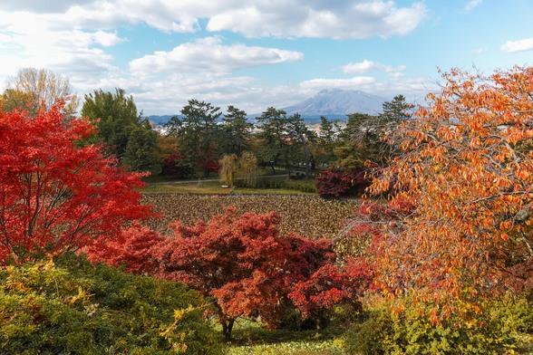 20151101午前の弘前公園dp0-46.jpg