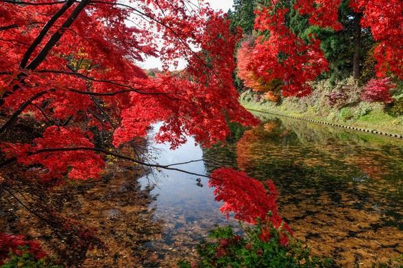 20151103午前の弘前公園XT10-25.jpg
