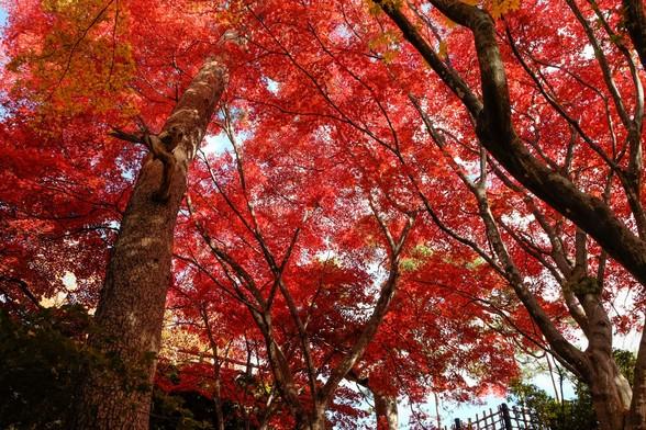 20151103午前の弘前公園XT10-89.jpg