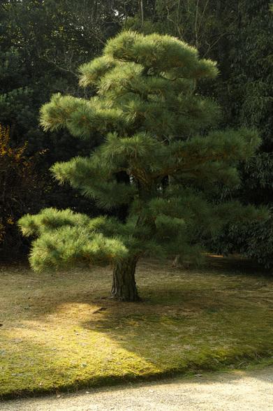 20151226午前の香川・栗林公園SD1-11.jpg