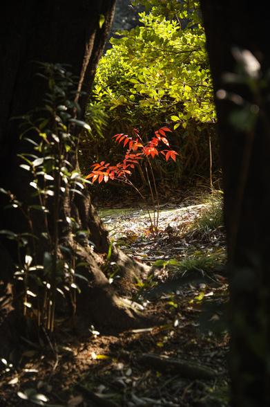 20151226午前の香川・栗林公園SD1-4.jpg