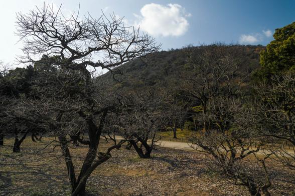 20151226午前の香川・栗林公園SD1-5.jpg