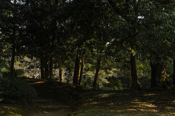 20151226午前の香川・栗林公園SD1-6.jpg