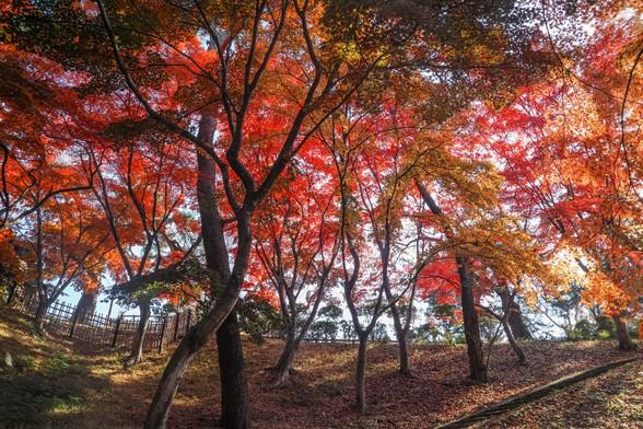 20171103午前の弘前・弘前公園SD1-118.jpg