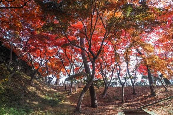 20171103午前の弘前・弘前公園SD1-130.jpg