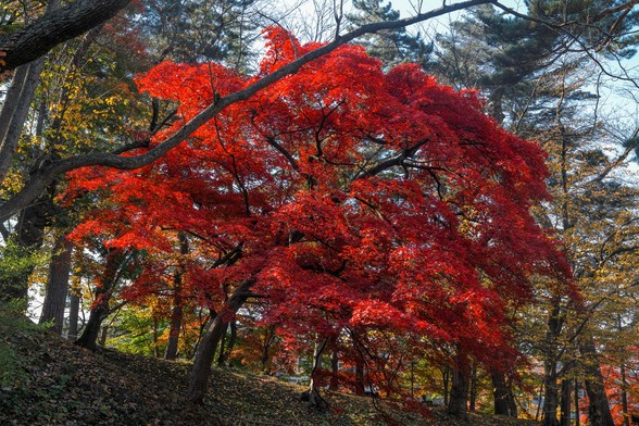20171103午前の弘前・弘前公園SD1-141.jpg