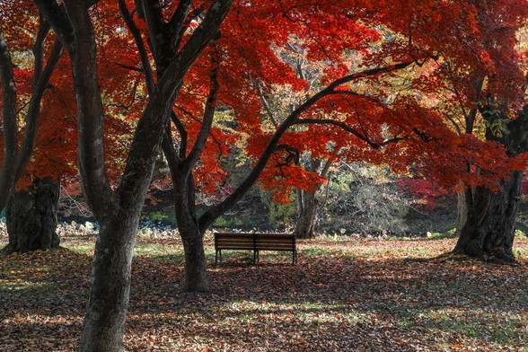 20171103午前の弘前・弘前公園SD1-159.jpg