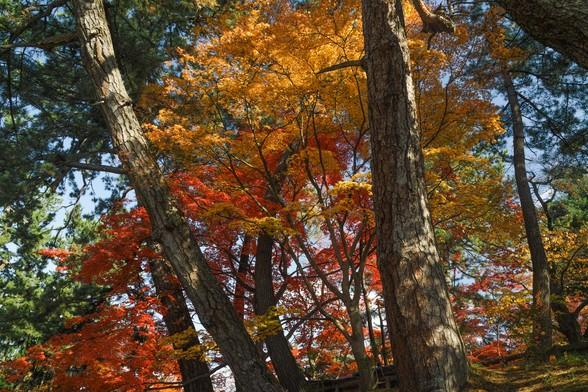 20171103午前の弘前・弘前公園SD1-192.jpg