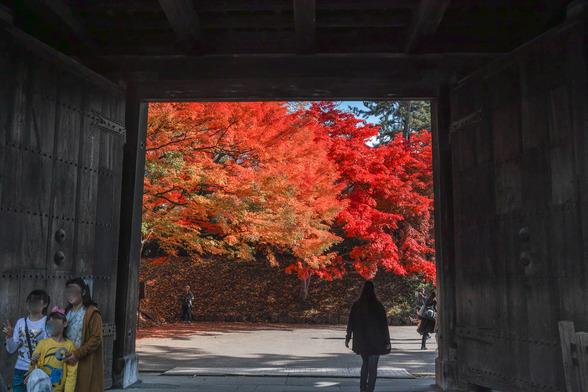 20171103午前の弘前・弘前公園SD1-203.jpg
