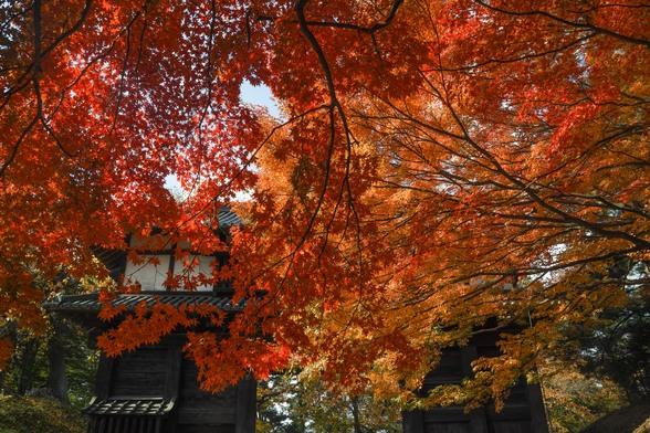20171103午前の弘前・弘前公園SD1-205.jpg